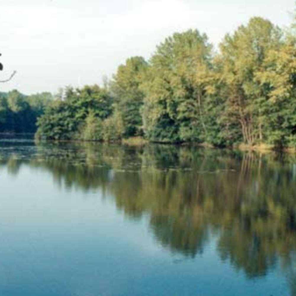Ardennes Thiérache - Etang de la Motte